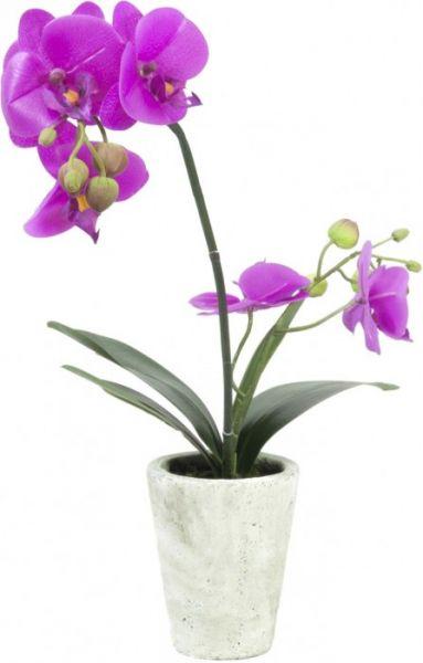 EUROPALMS Orchideen-Arrangement 3