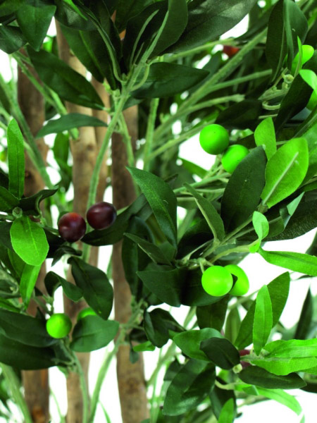 europalms olivenbaum mit fr chten 2 st mmig 250cm g nstig bei ltt. Black Bedroom Furniture Sets. Home Design Ideas